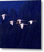 Flight Of The Swans Metal Print