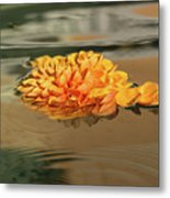 Floating Beauty - Hot Orange Chrysanthemum Blossom In A Silky Fountain Metal Print