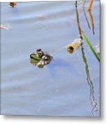 Floating Frog Metal Print