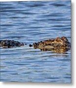 Floating Gator Metal Print