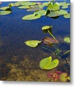 Floating Leaves Metal Print