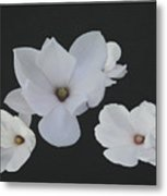 Floating Magnolias Dp20 Metal Print