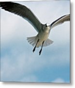Floating On Air Metal Print