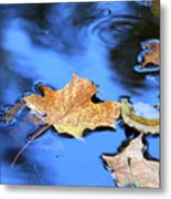 Floating On The Reflected Sky Metal Print