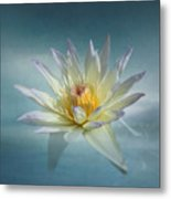 Floating Water Lily Metal Print