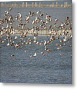 Flock Of Birds In Flight  Metal Print