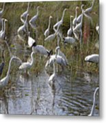 Flock Of Different Types Of Wading Birds Metal Print