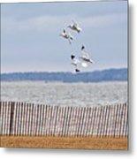Flock Of Gulls Metal Print