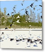 Flock Of Seagulls Metal Print