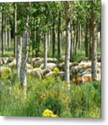 Flock Of Sheep With A Goat Metal Print