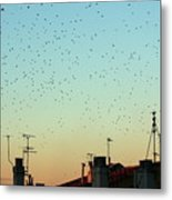 Flock Of Swallows Flying Over Rooftops At Sunset During Fall Metal Print