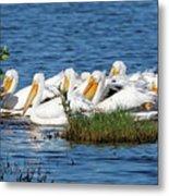 Flock Of White Pelicans Metal Print