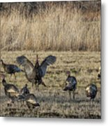 Flock Of Wild Turkeys Metal Print