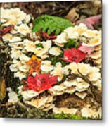 Floor Of The Forest In Fall Metal Print
