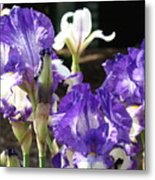 Flora Bota Irises Purple White Iris Flowers 29 Iris Art Prints Baslee Troutman Metal Print