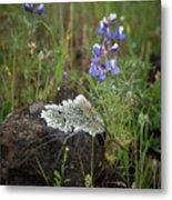 Flora On The Plateau Metal Print