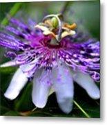 Flora Passiflora Metal Print