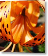 Floral Abstracts Art Prints Summer Tiger Lily Baslee Troutman  Metal Print