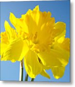 Floral Art Bright Yellow Daffodil Flowers Baslee Troutman Metal Print