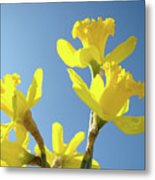 Floral Art Daffodil Flowers Spring Prints Blue Sky Baslee Troutman Metal Print