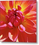 Floral Art Prints Orange Pink Dahlia Flower Baslee Troutman Metal Print