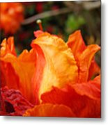 Floral Art Prints Orange Rhodies Rhododendrons Baslee Troutman Metal Print
