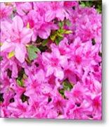 Floral Art Prints Pink Azalea Garden Landscape Baslee Troutman Metal Print