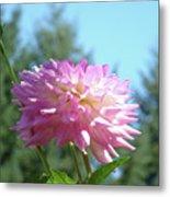 Floral Art Prints Pink White Dahlia Flower Pastel Baslee Troutman Metal Print