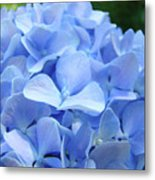 Floral Artwork Blue Hydrangea Flowers Baslee Troutman Metal Print