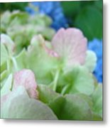 Floral Artwork Hydrangea Flowers Soft Nature Giclee Baslee Troutman Metal Print