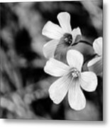Floral Black And White Metal Print