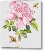Floral Botanicals-jp3779 Metal Print