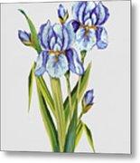 Floral Botanicals-jp3786 Metal Print