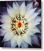 Floral Closeup One Metal Print