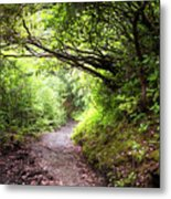Floral Confetti On The Trail Metal Print