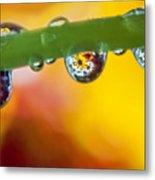 Floral Drop Trio  8054 Metal Print