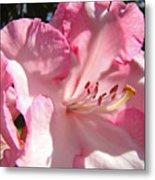 Floral Fine Art Prints Pink Rhodie Flower Baslee Troutman Metal Print