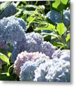 Floral Garden Art Prints Blud Hydrangea Flowers Metal Print