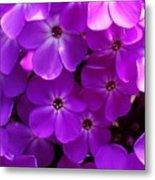 Floral Glory Metal Print