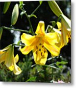 Floral Lilies Art Yellow Lily Flowers Giclee Baslee Troutman Metal Print
