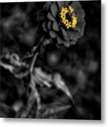 Floral October Zinnia End Of Season Sc 02 Vertical Metal Print