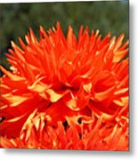 Floral Orange Dahlia Flowers Art Prints Metal Print