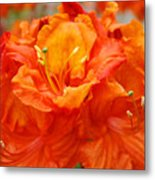 Floral Rhodies Art Prints Orange Rhododendrons Canvas Art Baslee Troutman Metal Print