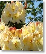 Floral Rhododendrons Fine Art Photography Art Prints Baslee Troutman Metal Print