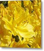 Floral Rhododendrons Garden Art Print Yellow Rhodies Baslee Troutman Metal Print
