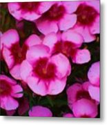 Floral Study In Red And Pink Metal Print