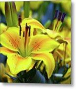 Floral Sunshine Metal Print