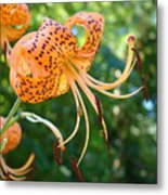 Floral Tiger Lily Flower Art Print Orange Lilies Baslee Troutman Metal Print