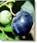 Florida - Blueberry Metal Print