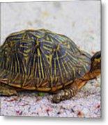 Florida Box Turtle Metal Print